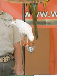 wildlife wendy requirements